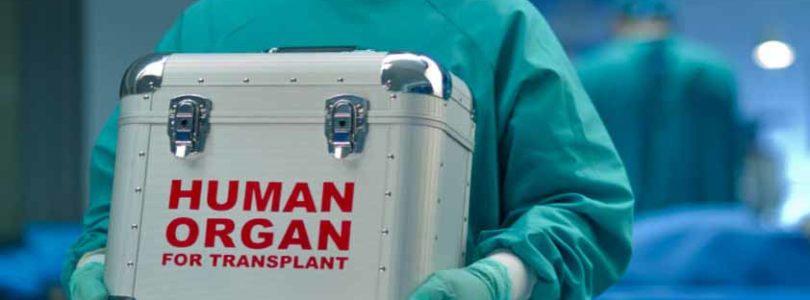 V Nemecku má byť darovanie orgánov de facto povinnosťou