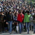 Nemecká štúdia: Do Európy migrujú predovšetkým mladí muži patriaci minimálne do strednej triedy.